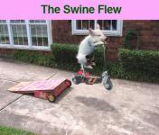 [swineflew.jpg uploaded 2 Aug 2009]