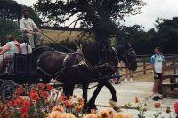 [1989 Shire Horse Centre039.jpg uploaded 14 Apr 2020]