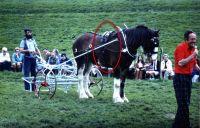 [horse007.jpg uploaded 14 Apr 2020]
