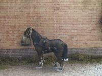 [Annabel Tethered horse 001 small.jpg uploaded 3 Nov 2016]